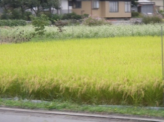 Shirakabako_061