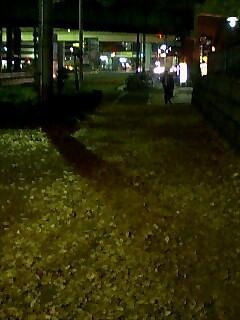 黄金色の歩道