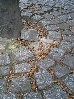 秋でんなぁ(3)