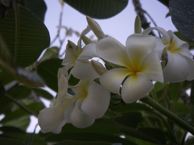 Guam0312pm_064