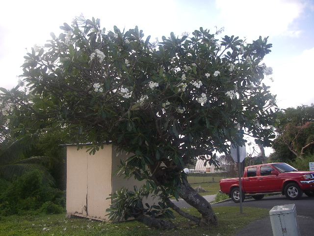 Guam0312pm_062