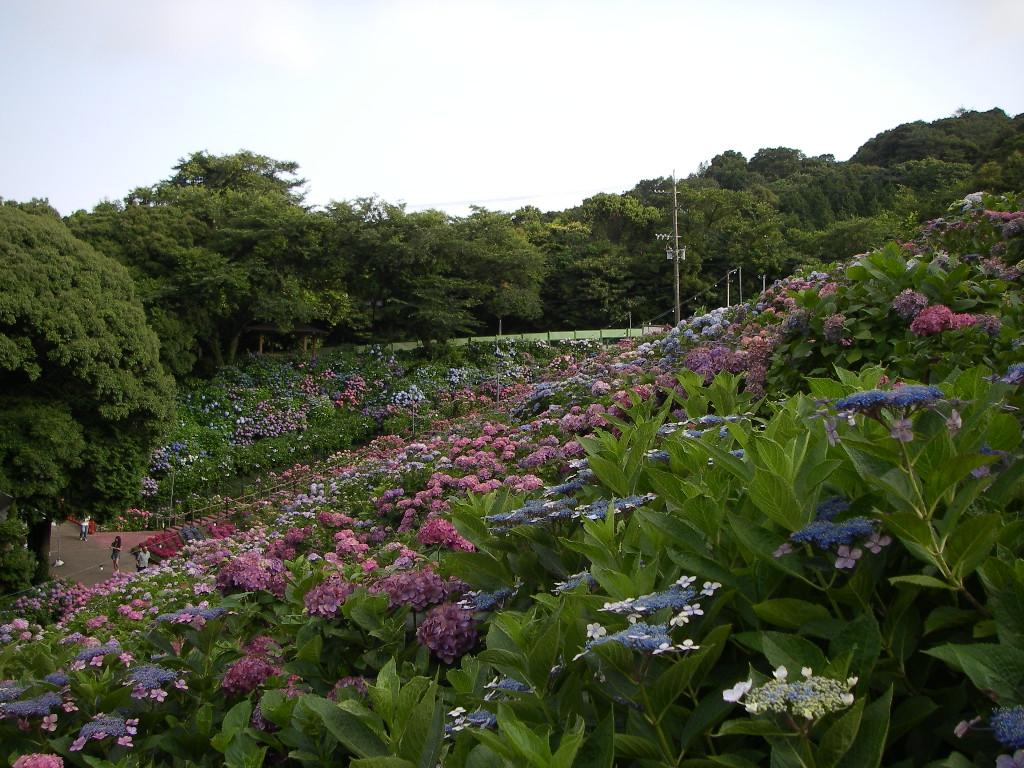 Katahara_031_2