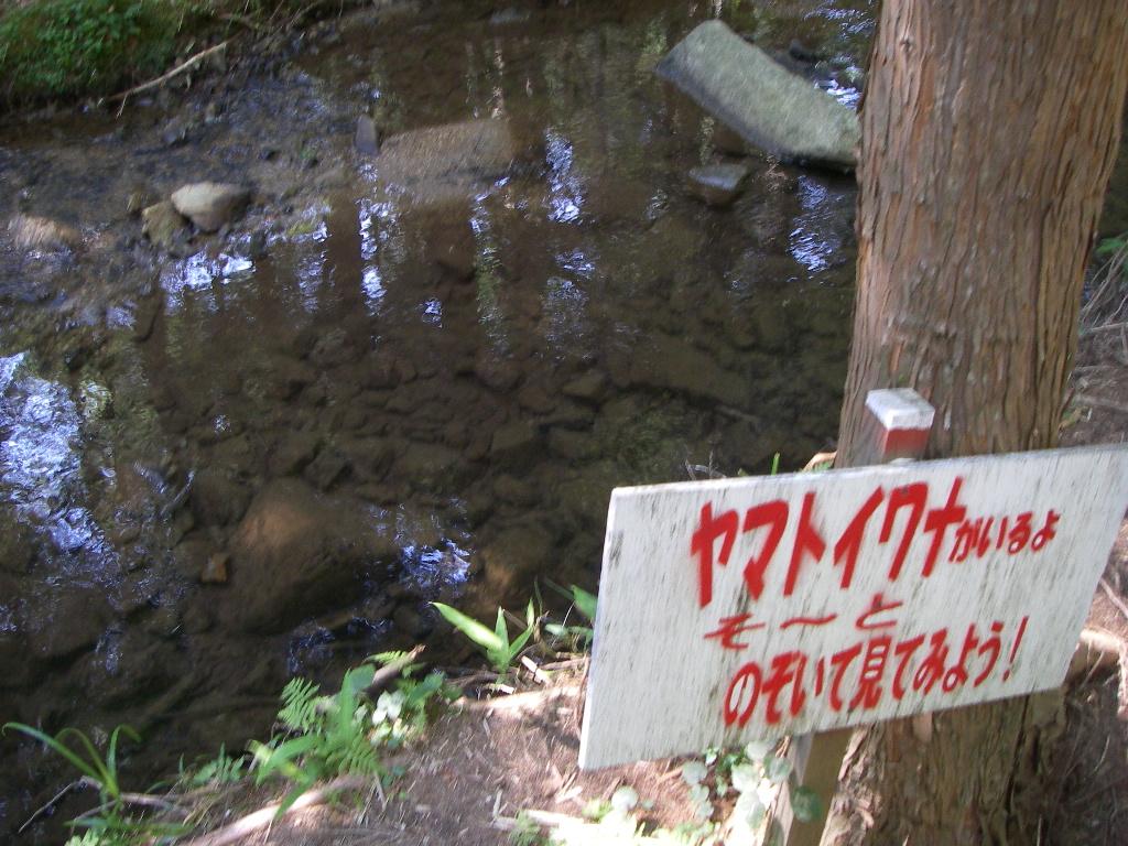 Fujimidai080726_078