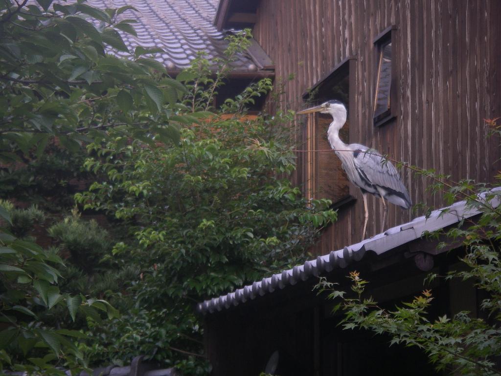 Kyoto080802_047