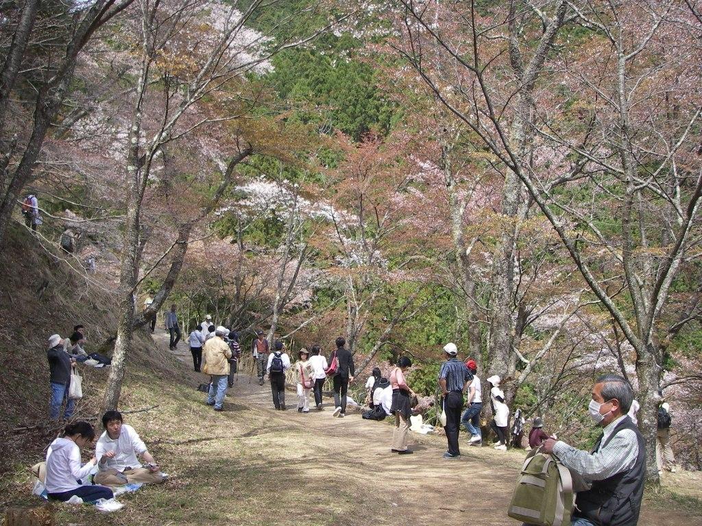 Yoshino_142