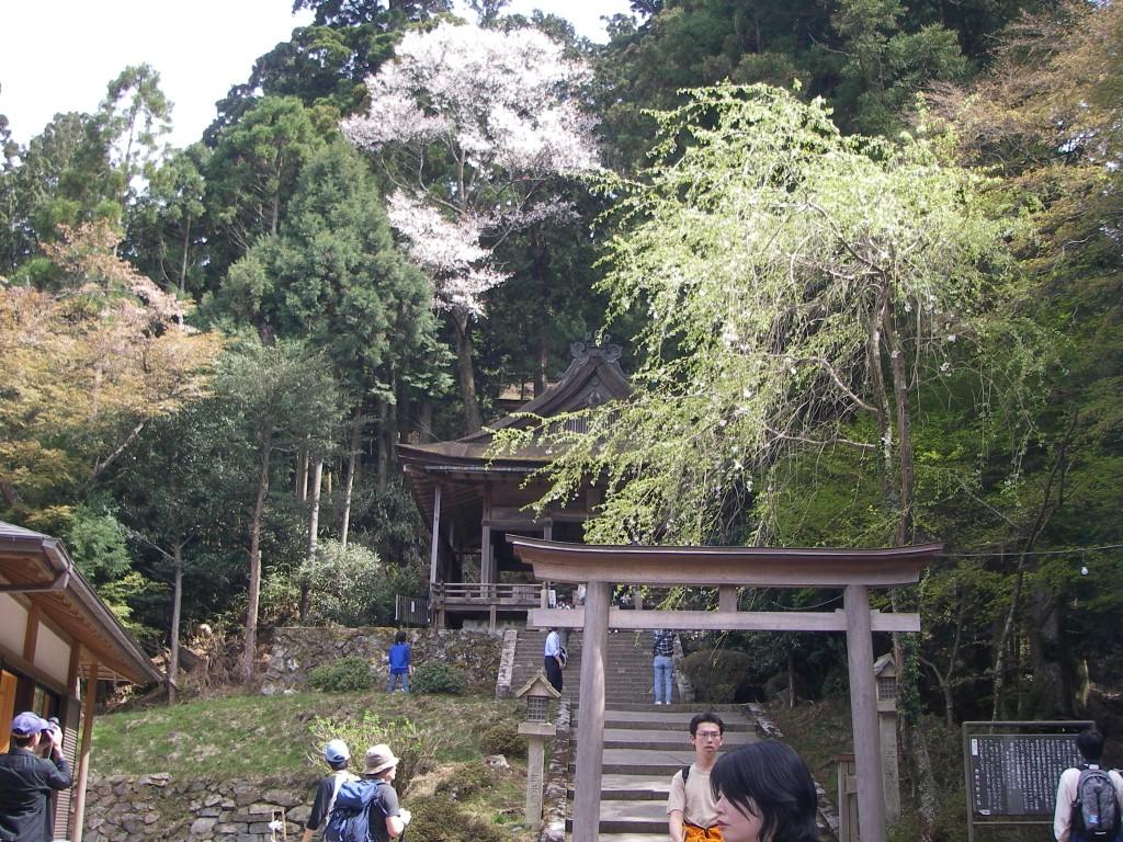Yoshino_152