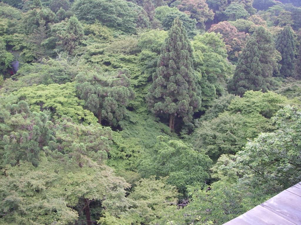 Kyoto090528_093