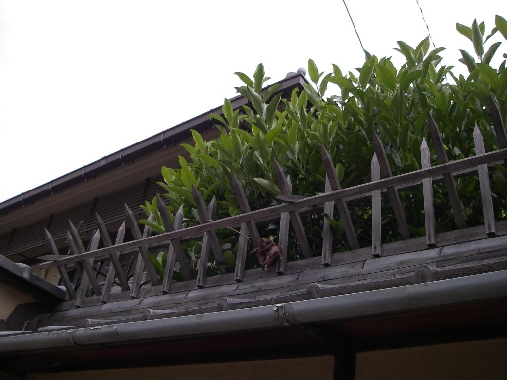 Kyoto090528_134