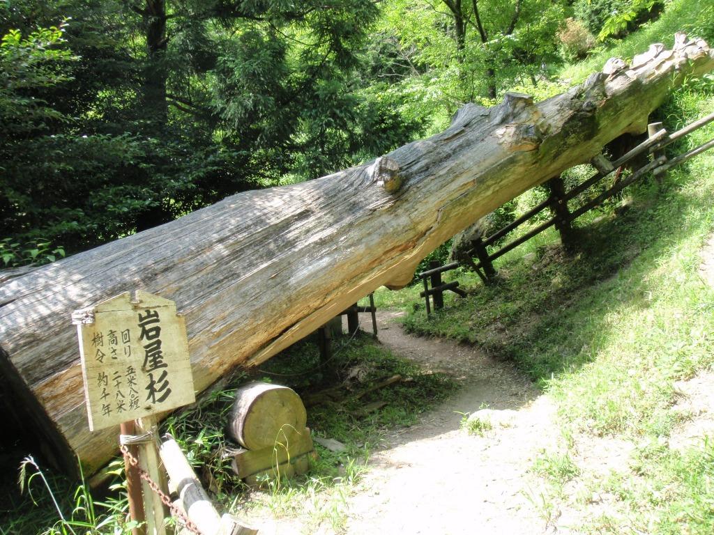 Sfutakamiyama_097