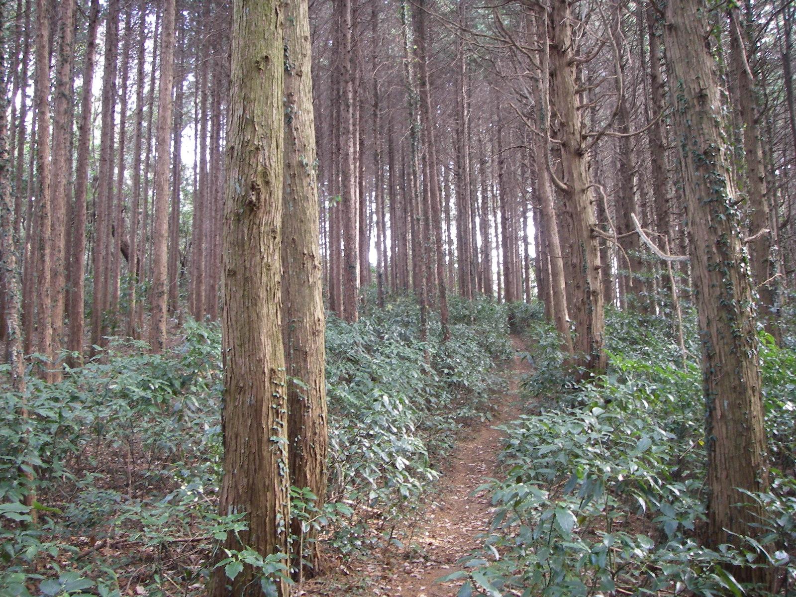 Kuwagaiyama_068